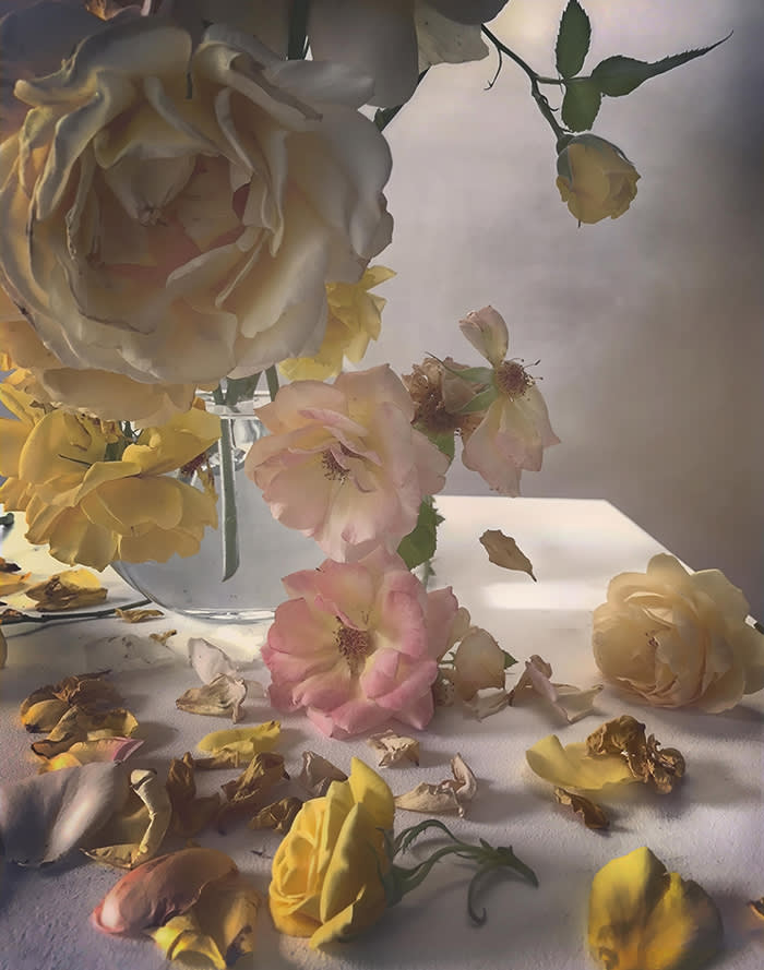 Portrait Of A Rose Photographs From Nick Knight S Garden