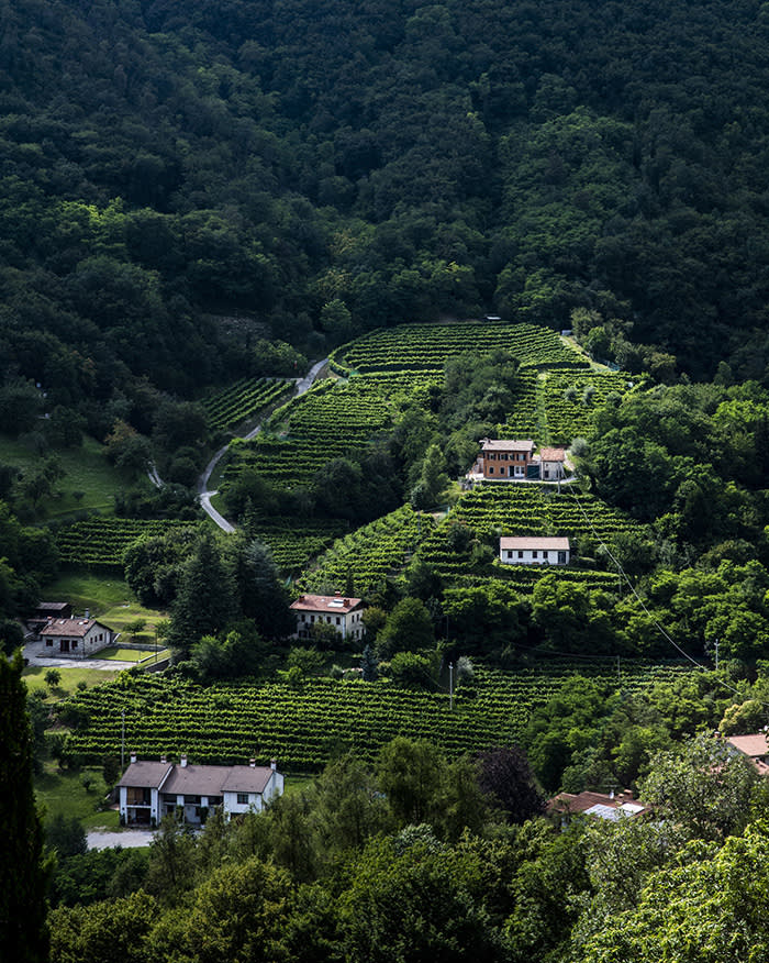 Around Lucio's home there are beautiful surroundings, pretty famous for the original Prosecco Wine, which comes exactly from this valley.