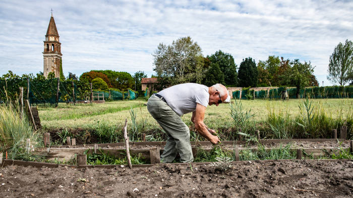 Former fisherman tends the allotments with the campanile in the background