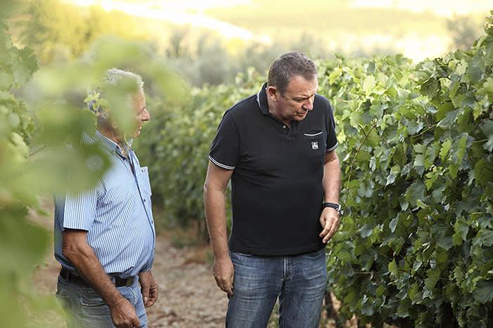 Skouras inspecting the vines
