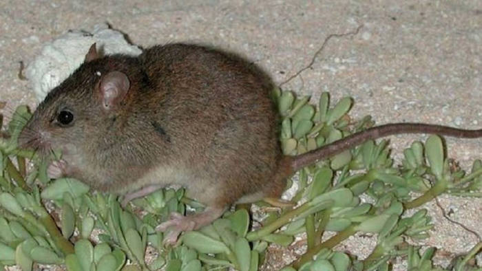 First mammal extinction attributed directly to man-made climate