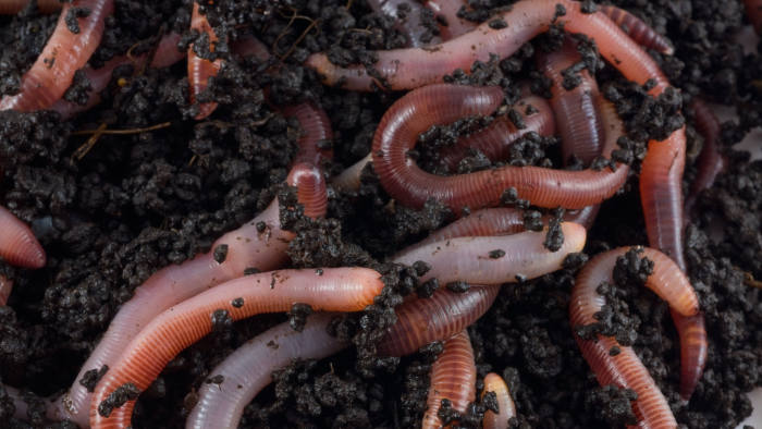 Structure. Earthworms. bait, crawler, dirt, earth