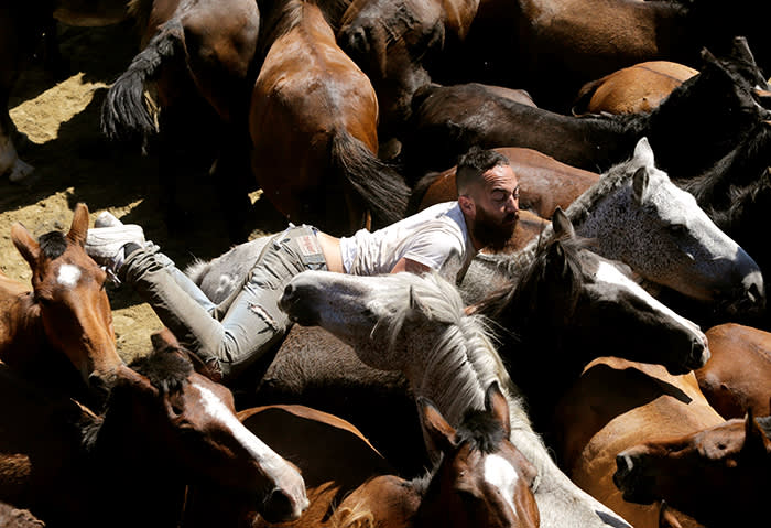 """A reveller tries to hold on to a wild horse during the """"Rapa das Bestas"""" traditional event in the village of Sabucedo, northwestern Spain July 9, 2018. REUTERS/Miguel Vidal"""
