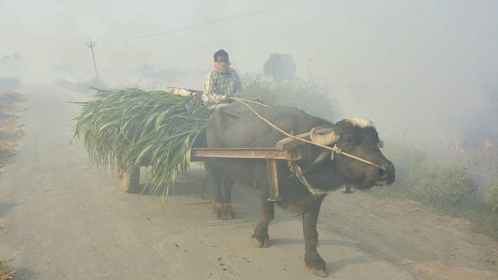 An Indian man rides a buffalo cart through smoke caused by farmers burning crop stubble on the outskirts of Amritsar, Punjab state, India, Thursday, Oct. 25, 2018. The Indian capital and large parts of north India gasp for breath for most of the year due to air pollution caused by dust, burning of crops, emissions from factories and the burning of coal and piles of garbage. (AP Photo/Prabhjot Gill)