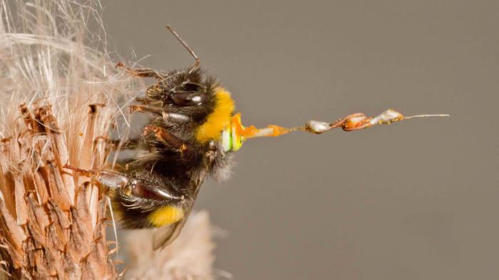 Bee with radar transponder