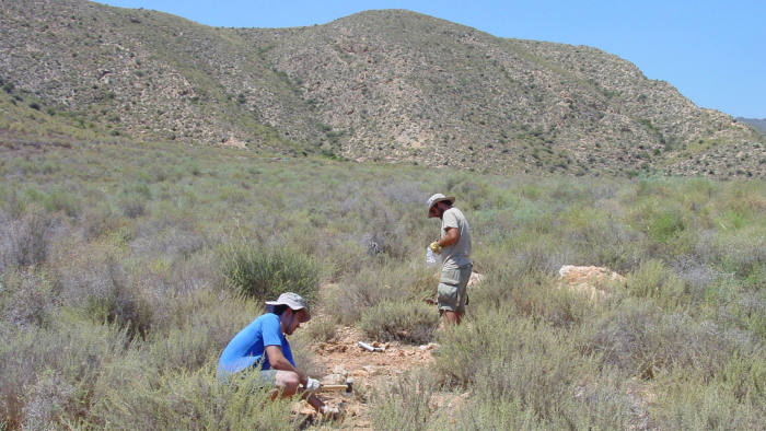 A soil/vegetation sampling by the University of Colorado and University of Córdoba in shrublands from eastern (semiarid) Spain in 2012. In this picture we are using soil corers and hammers, to obtain soil samples from the topsoil (10cm), and a quadrat to obtain information on vegetation structure (e.g., plant cover). Dr. Jose Luis Quero from the UCO, (pink and white shirt) and Manuel Delgado Baquerizo (black and blue shirts) were working in the same lab at the time in 2012. Photo credit: from Manuel Delgado Baquerizo.