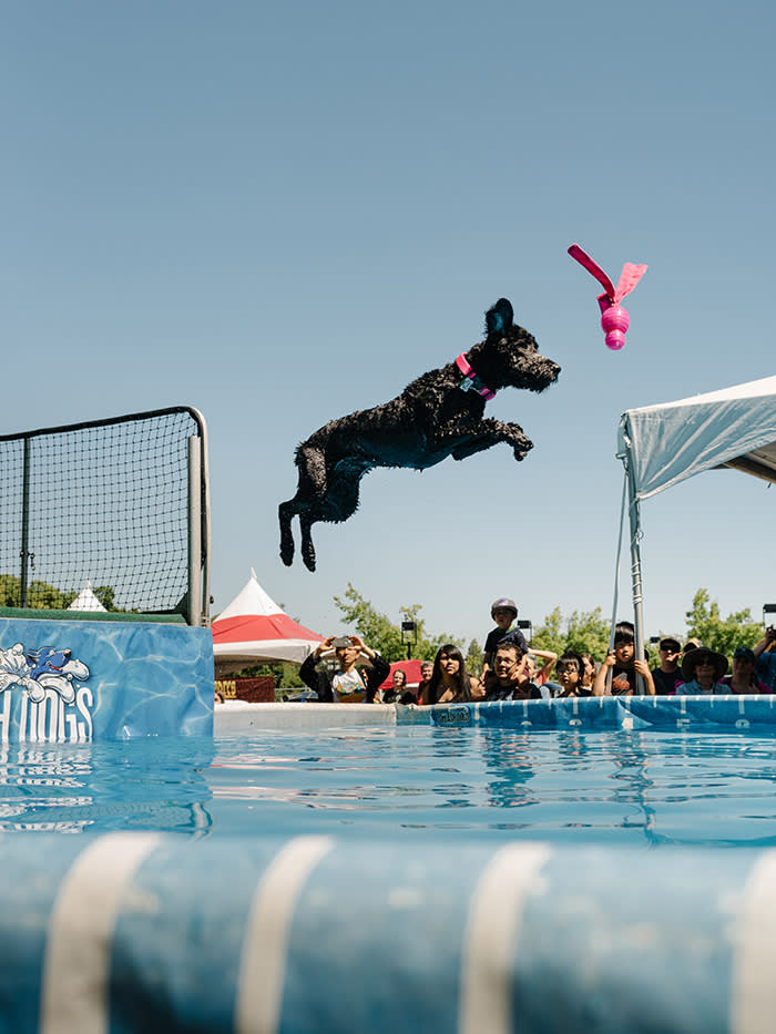 A 'long-jumping' dog at the California State Fair in Sacramento – the first stop on Henry Mance's 230-mile road trip from San Francisco to Reno via Nevada City. In theory, the Tesla should be able to handle this distance without recharging…