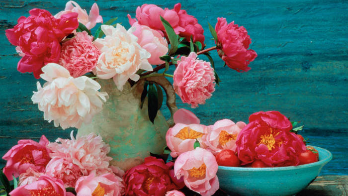 Peonies (Paeonia sp.) arranged in vase and bowl © Getty Images