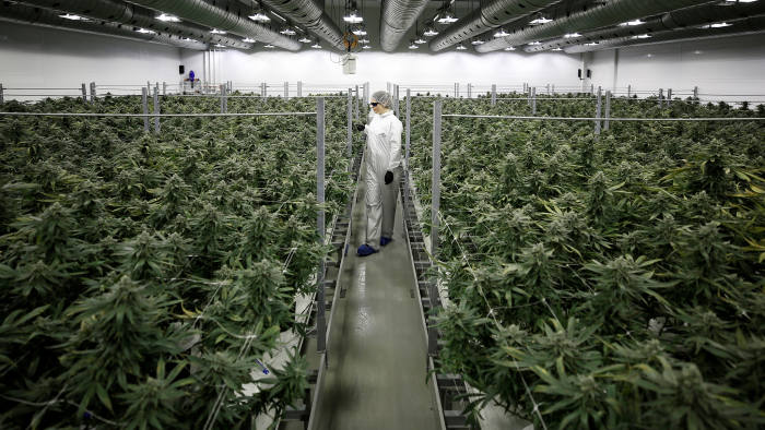 Is cannabis the new bitcoin? | Financial Times
