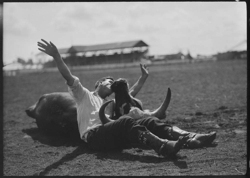Steer wrestler with downed steer, 1920–35, by Erwin E Smith (1886–1947) ©Amon Carter Museum of American Art, Fort Worth, Texas, Bequest of Mary Alice Pettis
