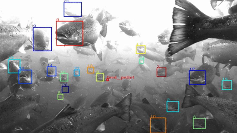 Google parent Alphabet invents fish recognition system