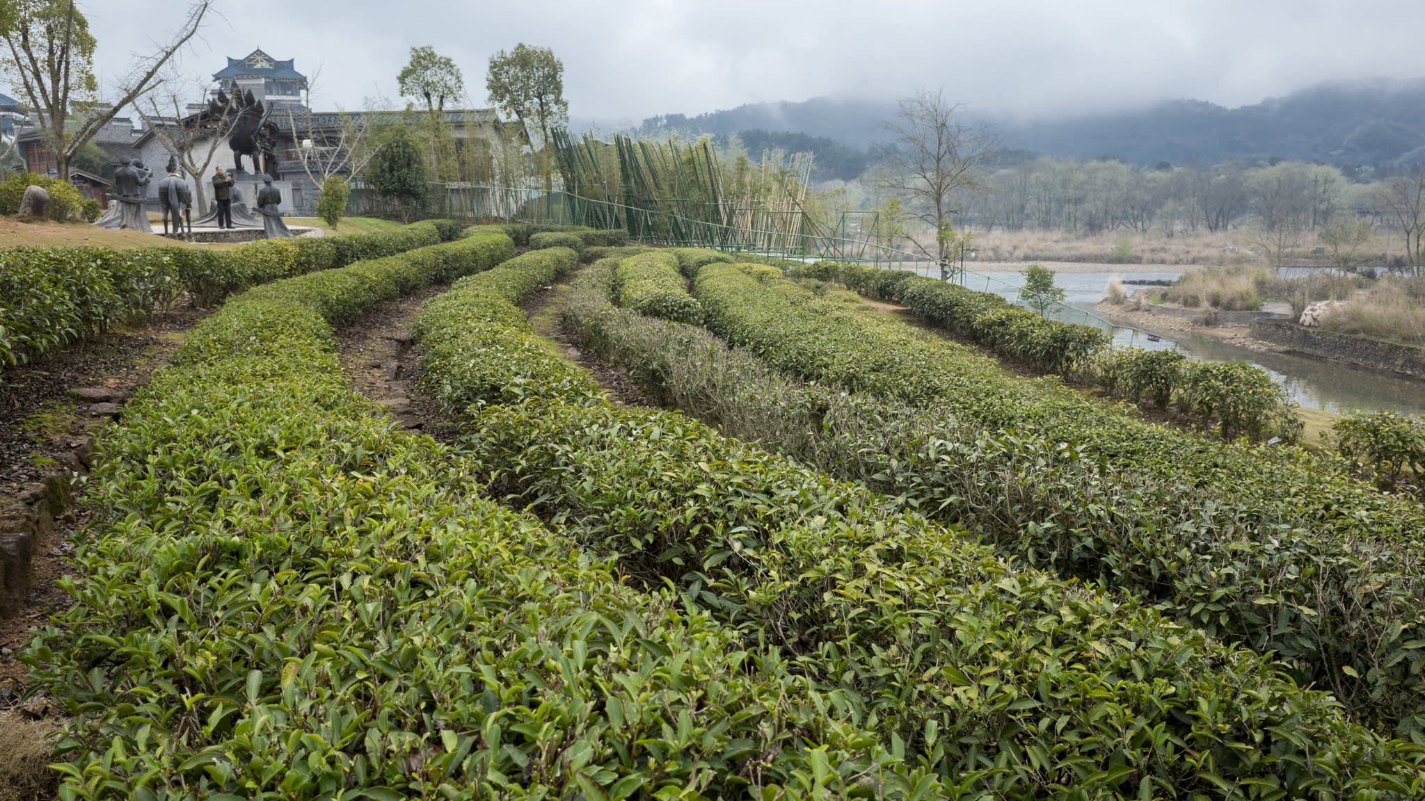 Wealthy Chinese consumers drive up price of luxury tea leaves