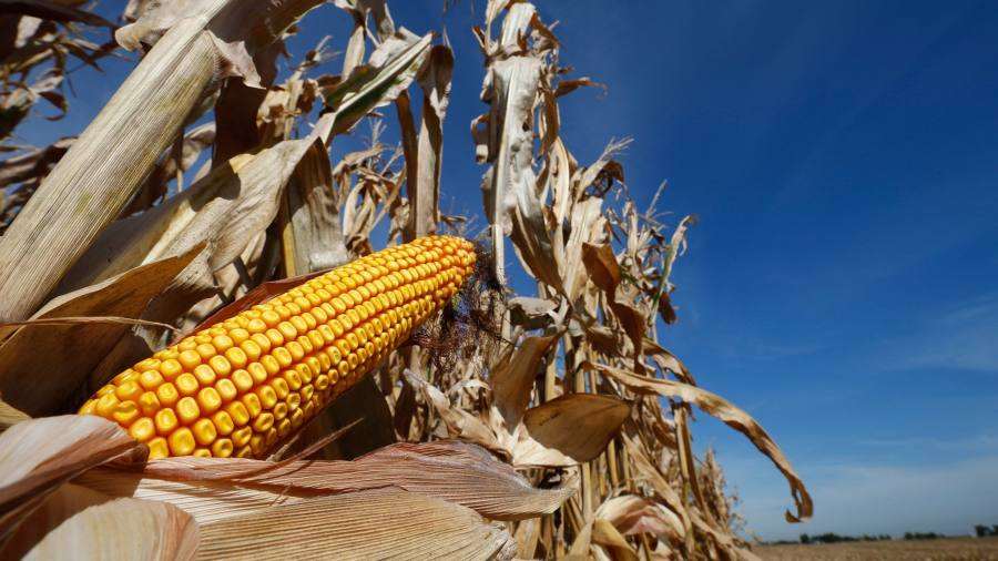 Trump administration biofuels policy angers US farmers