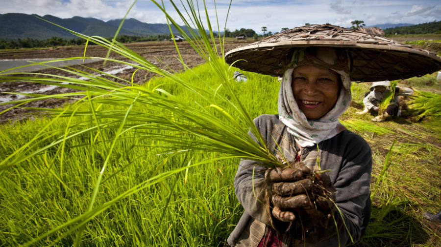 World Bank calls for agricultural productivity drive to cut poverty