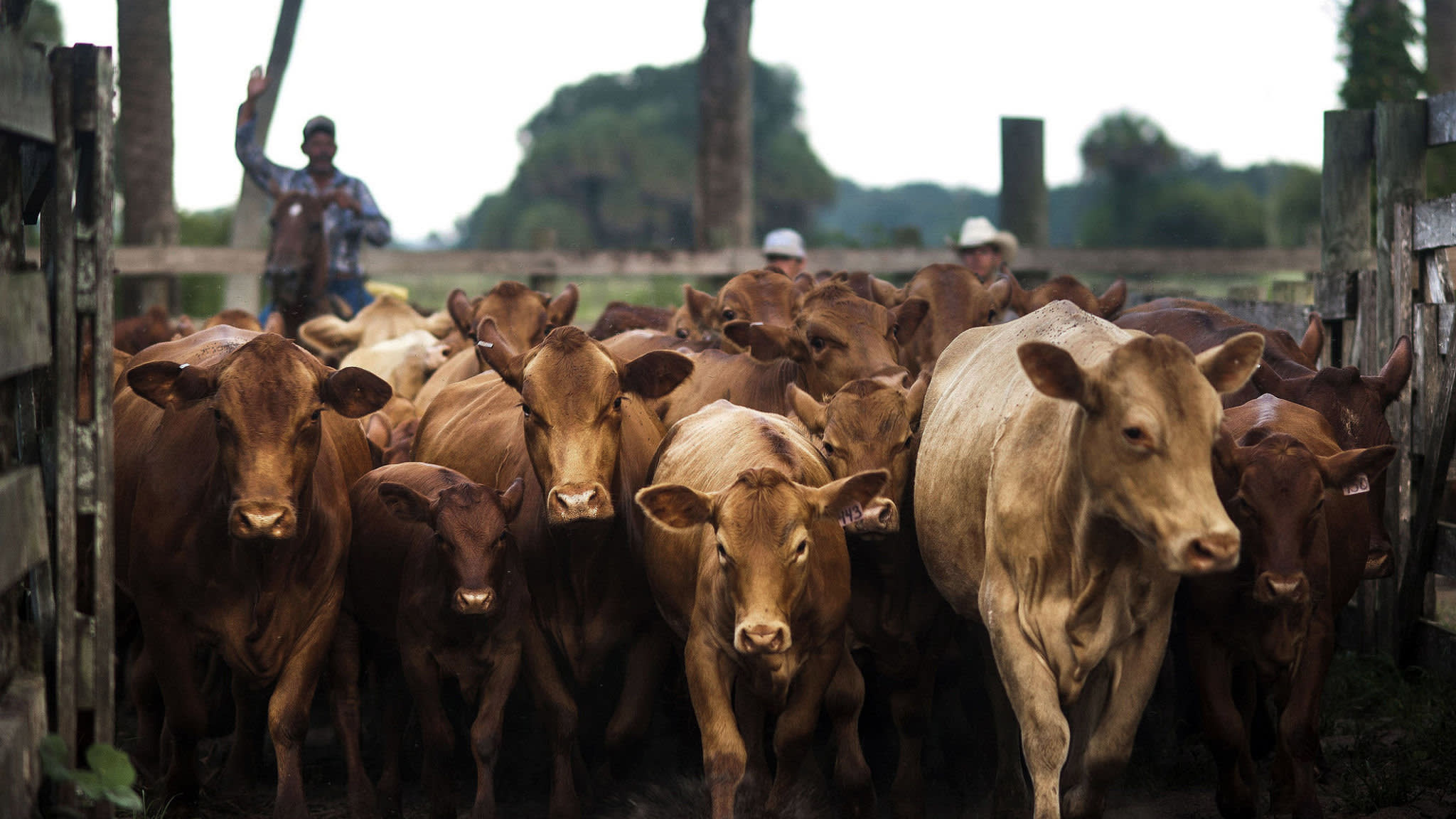 Cargill's bets on animal protein pay off as profits hit record