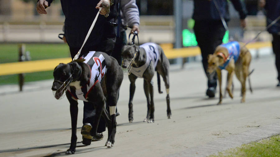 Greyhound racing in Australia goes to the dogs | Financial Times