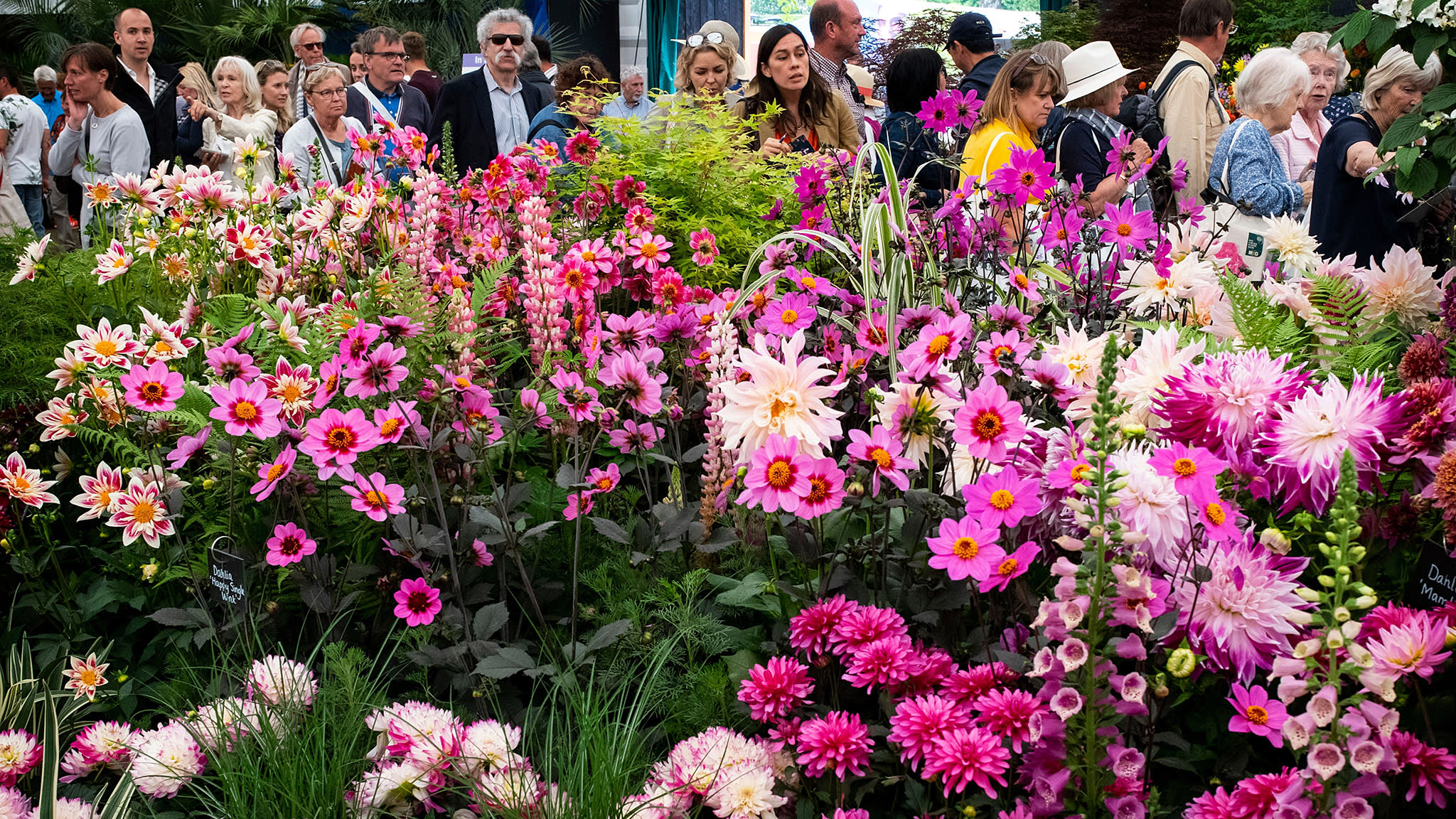 meet the new designers at the chelsea flower show