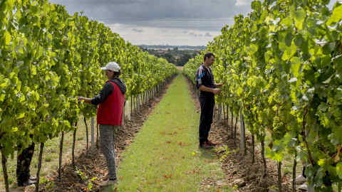 The rise of English sparkling wine — and which to drink this summer