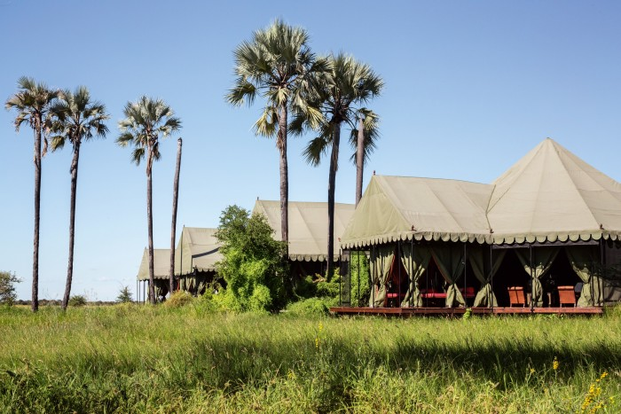 The main area at Jack'sCamp, surrounded by green season grasses