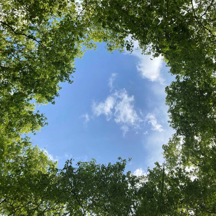 'A perfect oculus through which to admire a piece of sky': the canopy of the 13 trees that make up The Pantheon