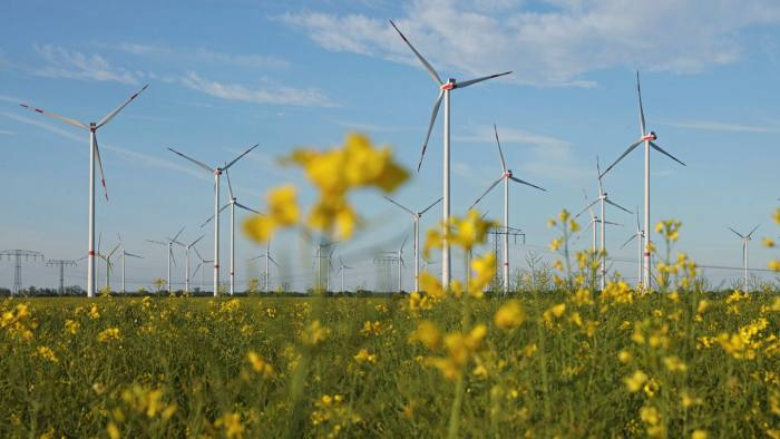 Flowers in a field of rapeseed as wind turbines producing electricity spin behind