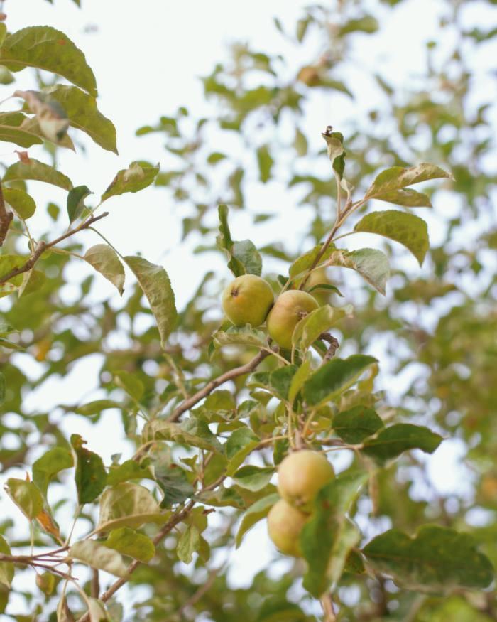 A lemon grove onthe estate