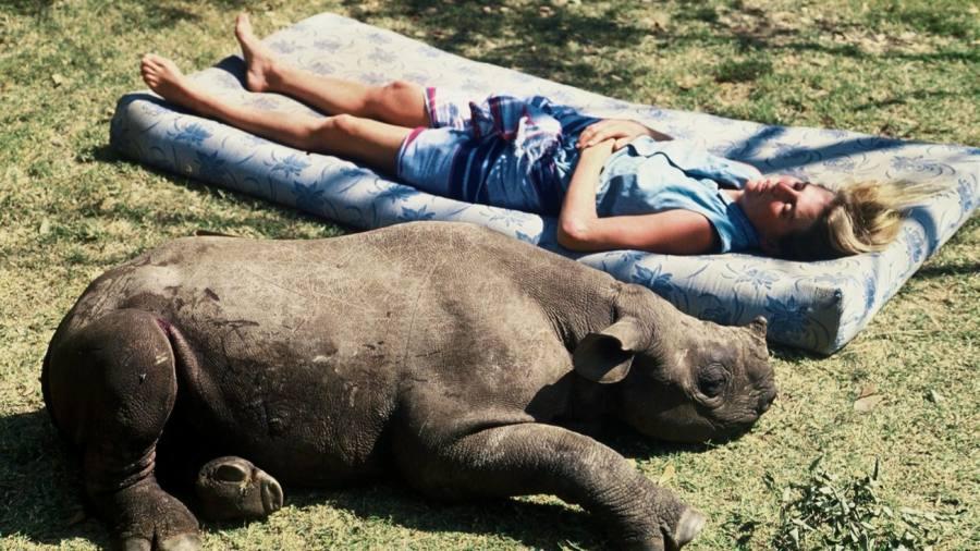 Buy a gold bar – help save a rhino