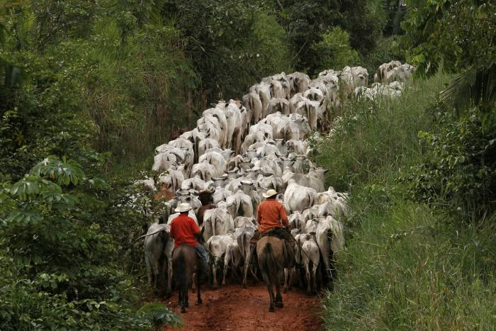 In 2013, herders drove cattle raised in the deforested Amazon rainforest area