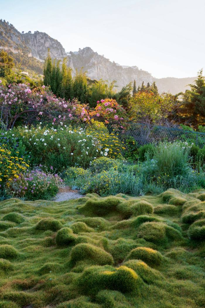 A Zoysia tenuifolia lawn in James and HelenBasson's garden inthe south of France