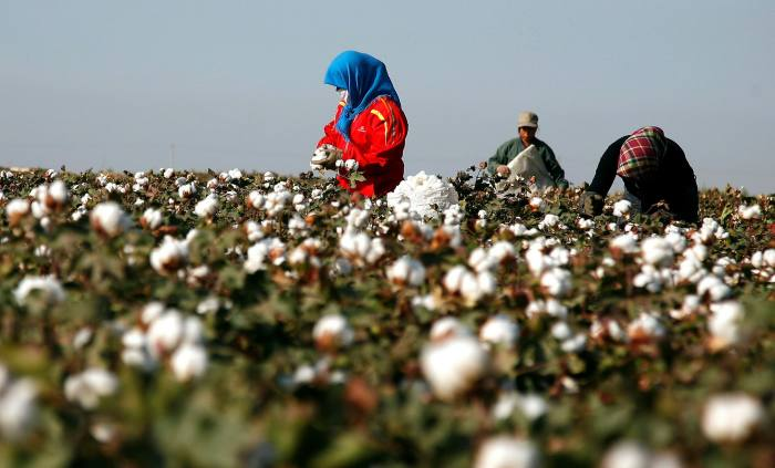Xinjiang produces nearly 90 per cent of China's cotton