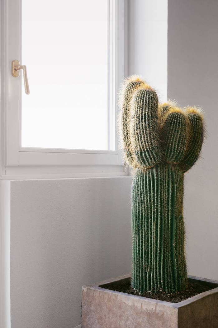 A cactus in his Florence living room