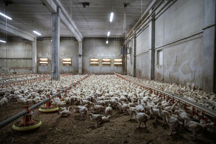 Chickens roost in a shed on a free range livestock and grain farm in Netin, Czech Republic. Businesses from the US to India will need to provide information to EU fund managers on issues from climate change to labour rights
