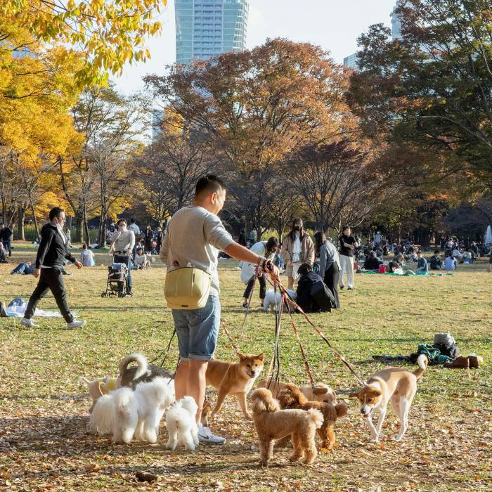 Pack life: dogs play a key role in the Yoyogi mix...