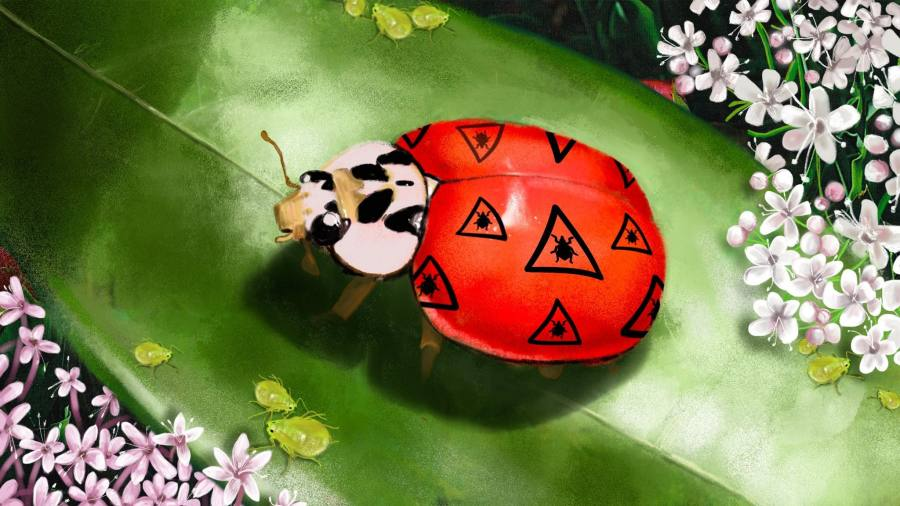 Unleash the ladybirds of war — controlling garden pests the natural way