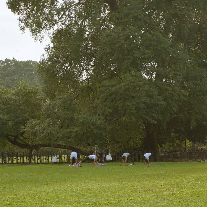 An outdoor yoga group in the Botanic Gardens...