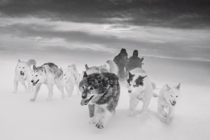 A 2015 shot by Axelsson of hunters and sled dogs on sea ice off east Greenland