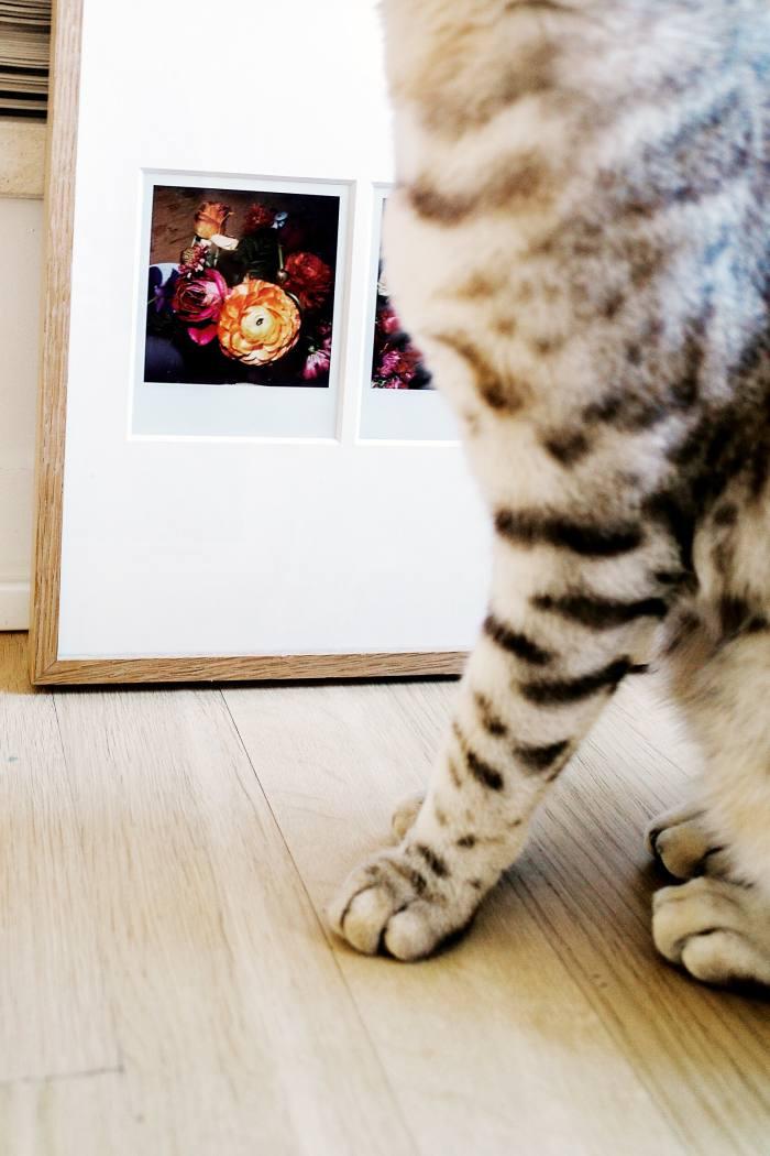 Her cat Matisse next toherAraki Polaroids