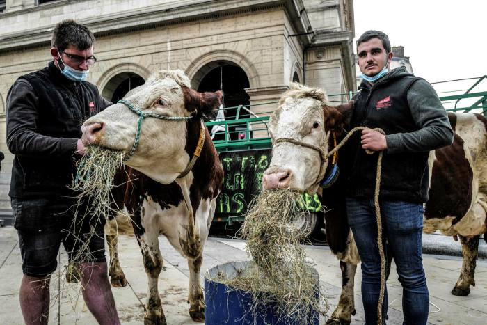 Farmers released herds of cows outside Lyon city hall to protest against the removal of meat from school lunches