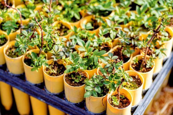 Tree planting in Yakama Nation, Washington