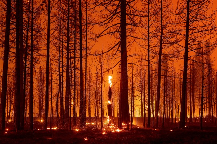 Trees smoulder and burn during the Dixie fire near Greenville, California, on August 3