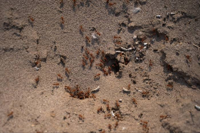 Ant holes at sites can be a sign of buried remains. According to offical data, Mexico has exhumed 6,900 bodies since 2006