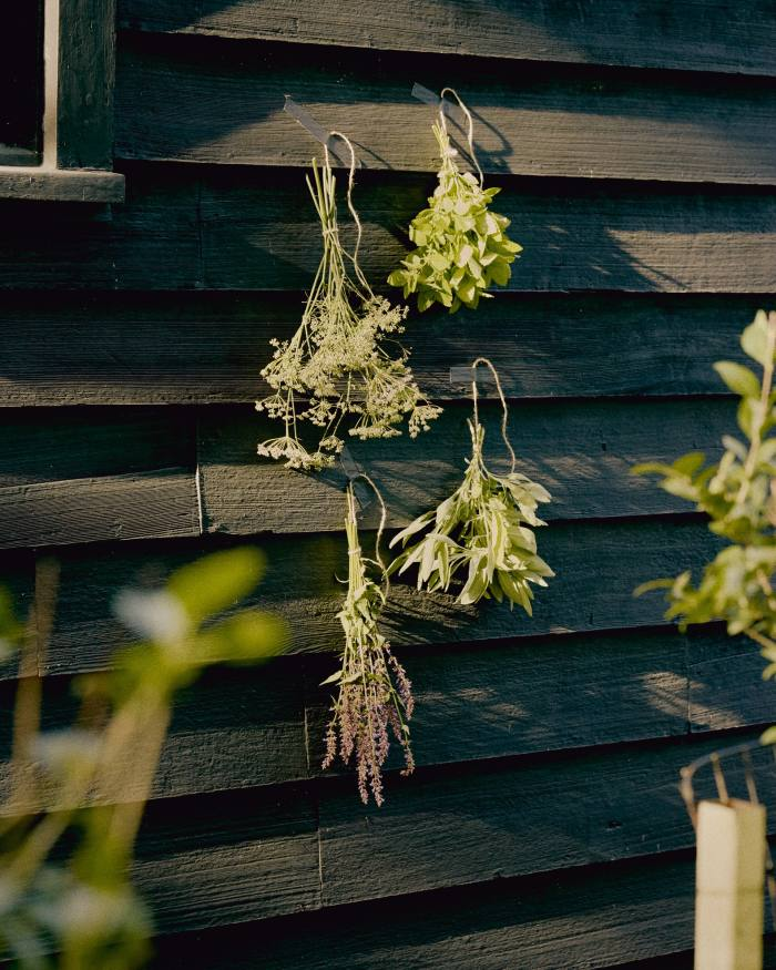 Herbs hung by Needleman for drying (clockwise from top left) – bronze fennel, lemon balm, lemon verbena, anise hyssop