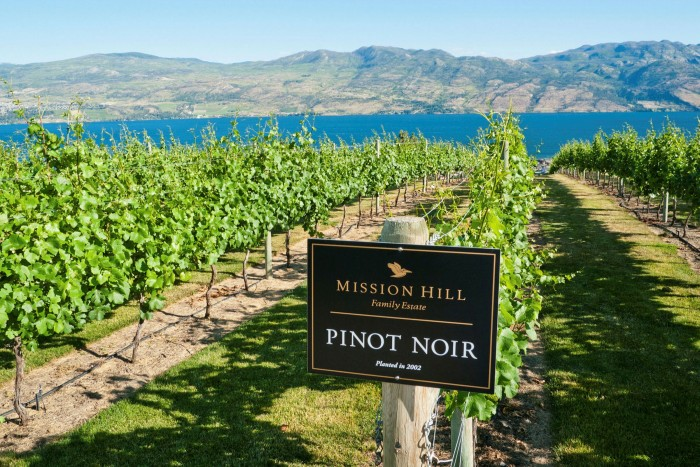 Pinot Noir vines at the Mission Hill winery in the Okanagan Valley British Columbia Canada