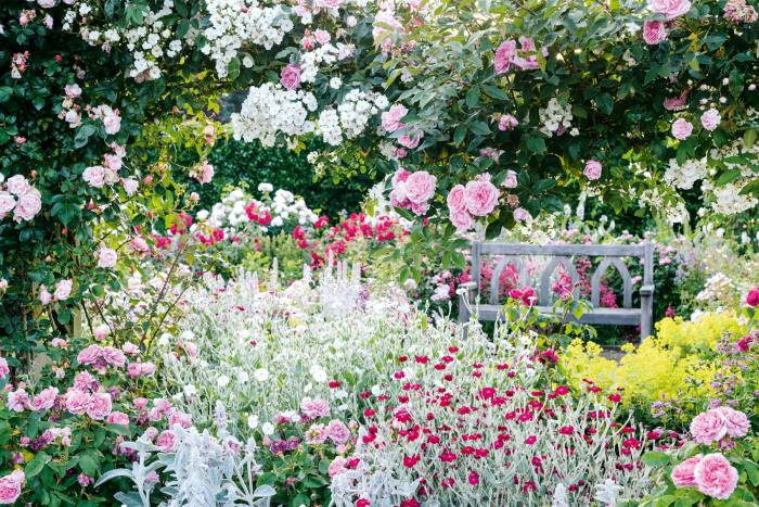 The Shrub Rose Garden at RHS Garden Rosemoor, Devon – the society recently published Your Wellbeing Garden: How to Make Your Garden Good for You