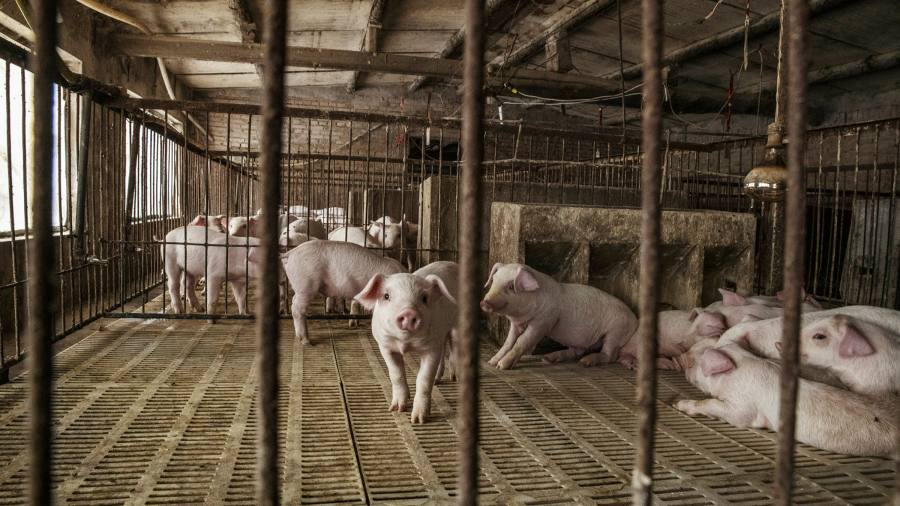 China's pork reserves running out as prices soar, analysts say