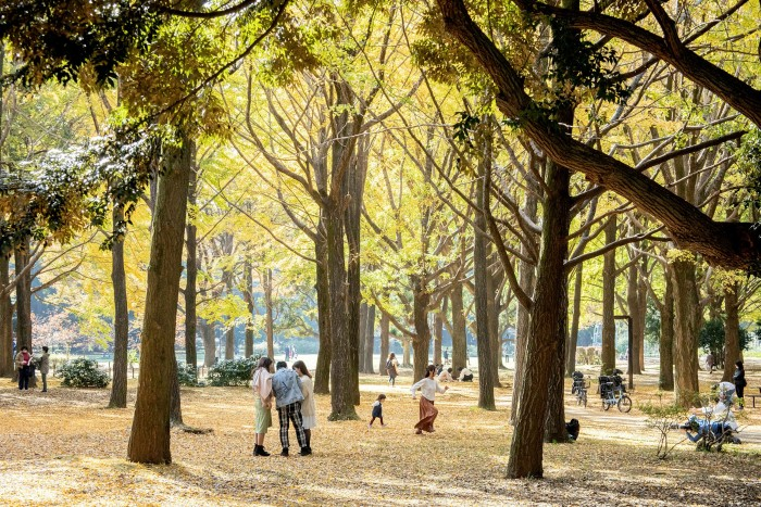 The park is relatively young — its trees were planted in the 1960s on what used to be Tokyo's Olympic Village