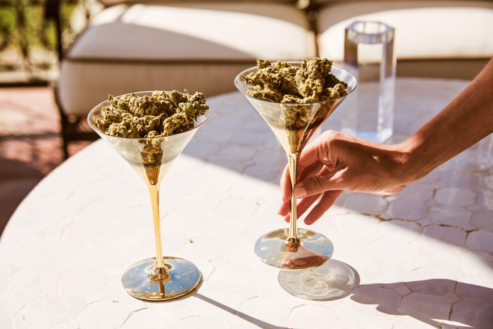Cannabis flowers cultivated for Canndescent