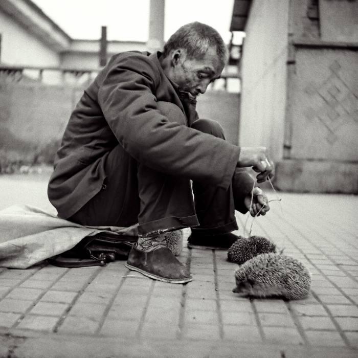 Hedgehog Man – a man sells hedgehogs on the street for food