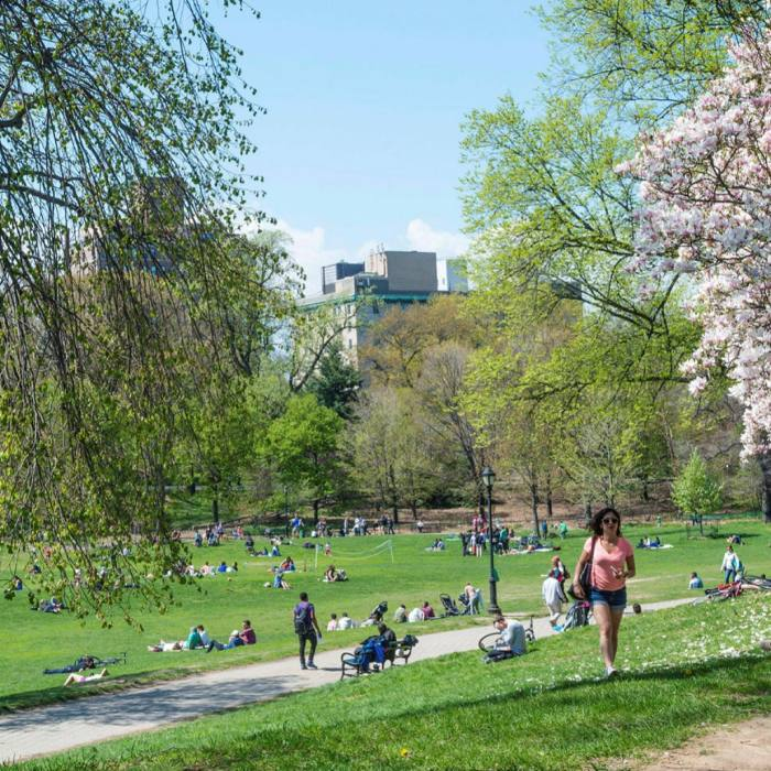 ...before reaching the green expanse of Prospect Park
