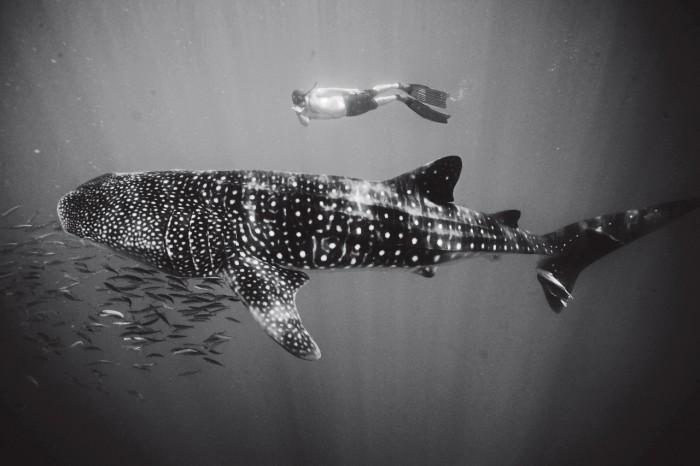 TBA21–Academy's Markus Reymann with a whale shark